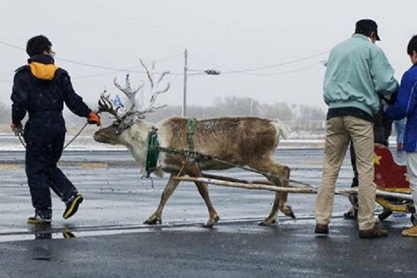 Domino's in Japan intends to use reindeer to deliver pizzas in the winter.