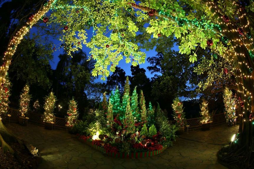 A 2km path at the Singapore Botanic Gardens will be lit up by 200 decorated trees.
