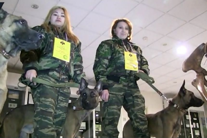 The three dogs in a screenshot from an online video report.