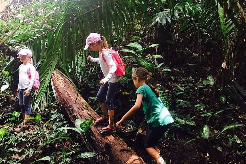 Forest School Singapore conducts two-hour journeys through forested areas. Nature Play, supported by social enterprise Chapter Zero Singapore, takes children to a forested area at Tampines Eco-Green or Dairy Farm Road area for child-led play sessions
