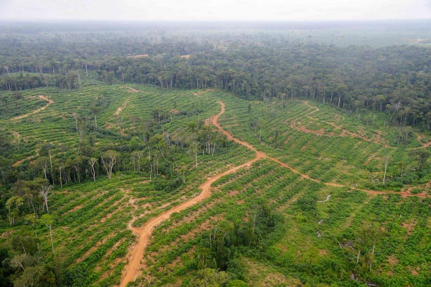 An aerial view showing palm oil plantations belonging to Olam in Kango, central Gabon, in 2014.
