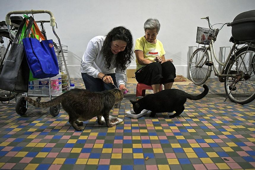 Ms Shirley Tan feeding the stray cats at Madam Nancy Koh's Beach Road estate. Madam Koh, who has been feeding strays out of her own pocket for the past 20 years, will receive free pet food supplies from an annual donation drive initiated by Ms Tan.