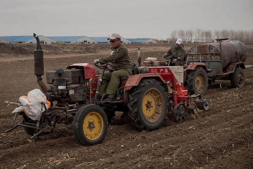 Farmers with tractors working in a corn field in front of a dairy farm (back) in Gannan county, Heilongjiang province, on May 3, 2016.