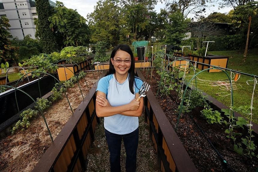 Ms Faith Foo, who has planted corn, eggplants and melons in her HortPark plot since August, says the NParks' scheme has taken root because the plot renter can control what he wants to grow. In community gardening schemes, everyone chips in but the he