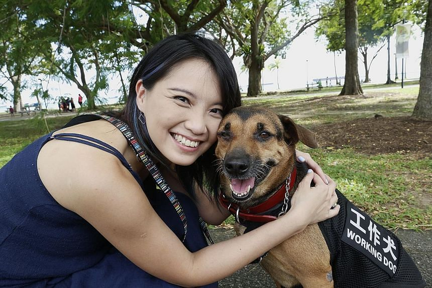 Ms Chew learnt to train her dog Butter to pick up the smell of someone having low blood sugar levels, with the help of people on online forums. Butter has even nudged her awake at night when she was fast asleep and had no idea her blood sugar levels