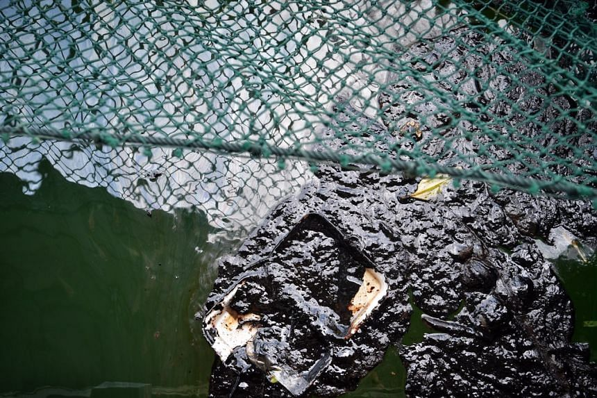 Crude oil is seen on the surface of the water of a fish farm in Pulau Ubin, on Jan 4, 2017.