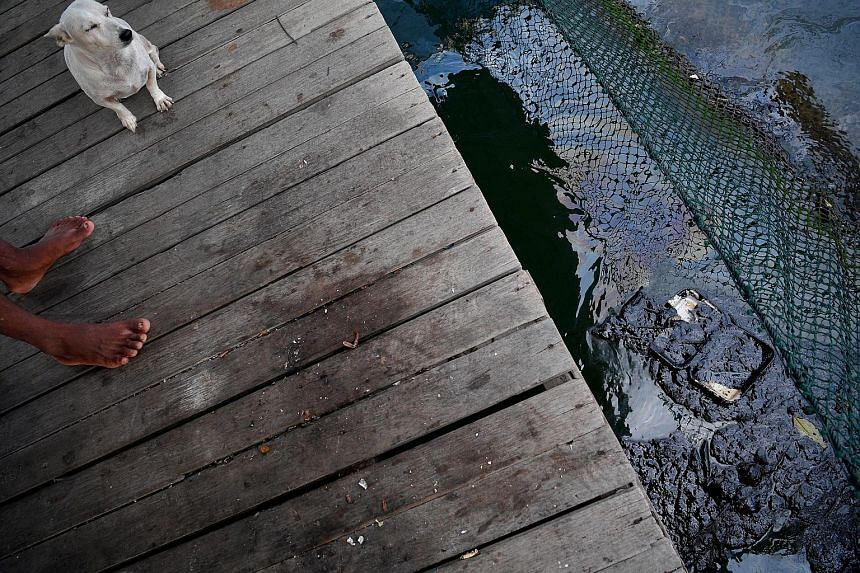 Crude oil in a pen at a fish farm on the outskirts of Pulau Ubin yesterday. Coastal fish farmers have been advised to use canvas skirting to prevent oil from contaminating their stocks. Fish samples have been collected for food safety tests.