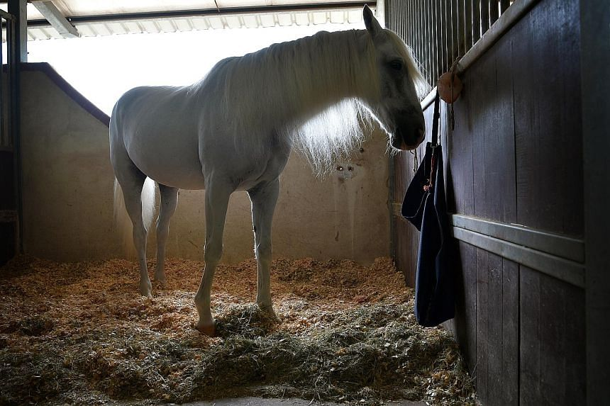 """Mr Danial said that Tata is so friendly that it would """"just pop out his head"""" when he walks past the stable. Mr Danial Sadely, who was diagnosed with attention deficit hyperactivity disorder when he was younger, underwent counselling sessions to litt"""