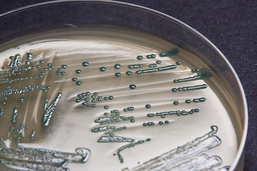 Clusters of drug-resistant bacteria. It is estimated that several thousand cases of such resistance occur in Singapore annually.