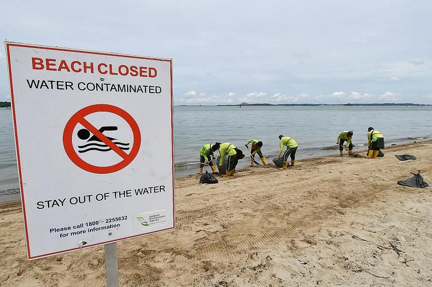 NEA contractors clearing the oil-stained sand on Changi beach yesterday.