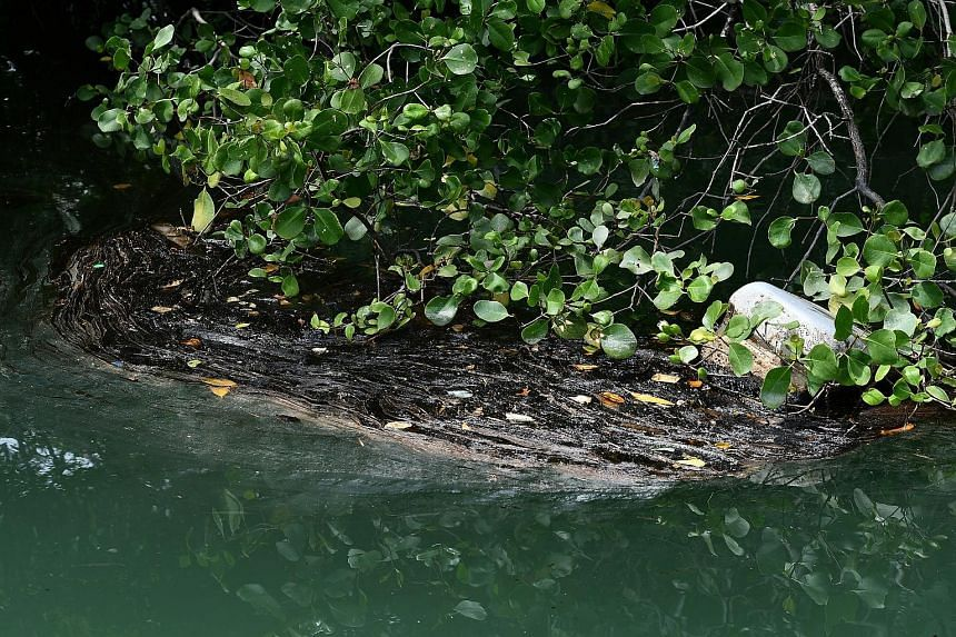 Oil floating on water near mangroves at Pulau Ubin yesterday. Cleanup operations were carried out on a 100m stretch of Noordin beach. A mother with her two children picking up seashells yesterday on Changi beach, which was lined with bags filled with