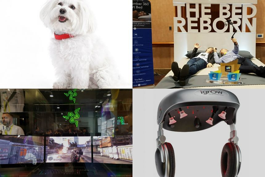 Some of the quirky gadgets ST's Trevor Tan encountered at CES 2017: (clockwise from left) the Kyon smart dog collar, the Sleep Number 360 Smart Bed, the iGrow hair growth system, and the Razer Project Valerie gaming laptop.