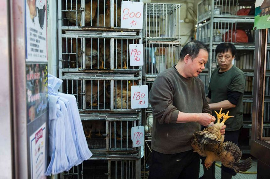 A shop owner holding a live chicken for sale in the Wanchai markets of Hong Kong on Dec 30, 2016. Hong Kong has confirmed three human cases of H7N9 in three weeks.