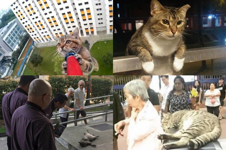 Cats in Singapore that have won the Internet and our hearts with their antics.