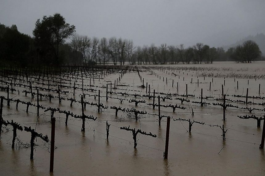 Vines at a vineyard standing in flood waters as a new round of rain and snow storms swept California and Nevada on Tuesday.