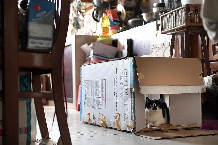 One of Ms Ivy Tan's three rescue cats registered under the Love Cats pilot programme in Chong Pang, where residents and shopkeepers said they have not had many cat-related nuisances in the area.