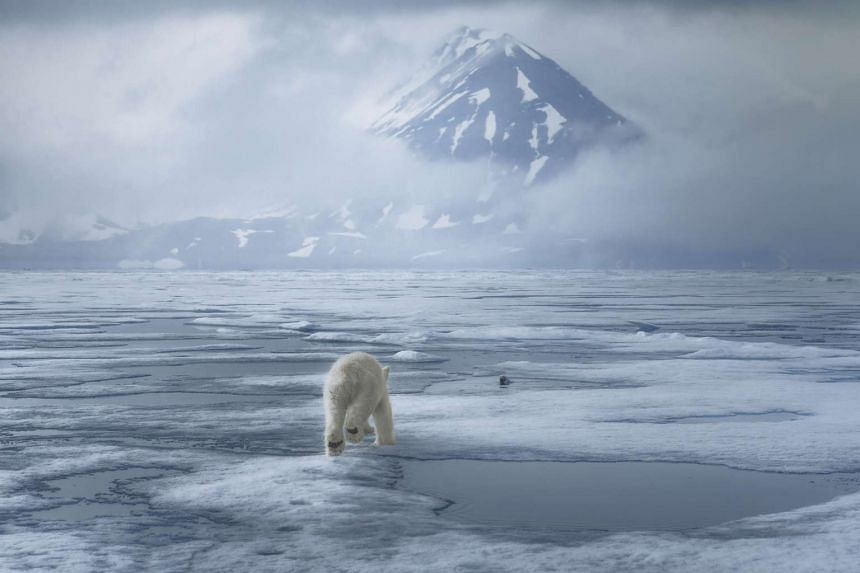 A photo of a polar bear running towards a seal in Spitsbergen, Svalbard, taken by photographer Karim Sahai. It is on display at The Wild Arctic exhibition at The Fullerton Hotel.