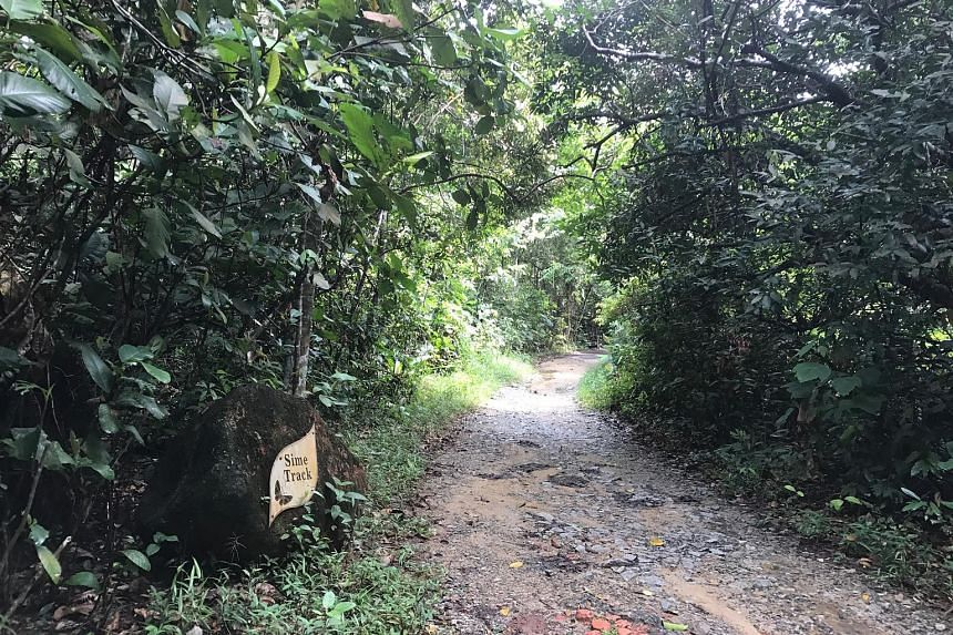 Last Thursday, the Sime Track (above) and Terentang Trail (below) were still open to the public. There was also no sign of works.