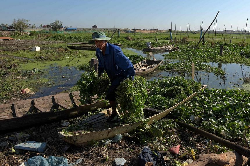 A Cambodian with his morning glory harvest in Phnom Penh yesterday. Cambodia, together with Myanmar and Laos, are looking to Vietnam to provide the template for transforming their economies from agricultural to export-led ones.