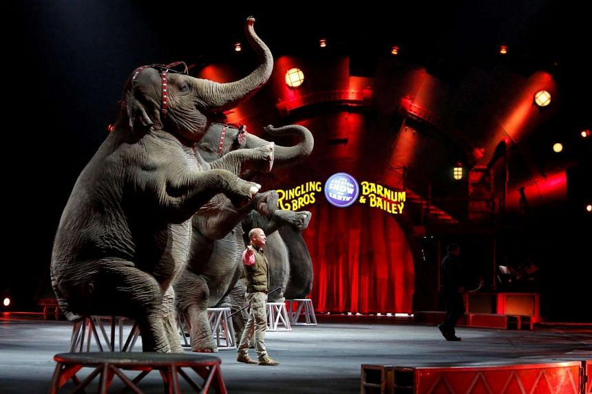 Elephants performing at the Ringling Bros and Barnum & Bailey Circus show at the Mohegan Sun Arena at Casey Plaza in Wilkes-Barre, Pennsylvania, on April 30, 2016.