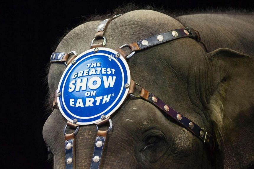 "Known as the ""Greatest Show on Earth"", Ringling Bros. and Barnum & Bailey Circus can trace its roots back to 1871."
