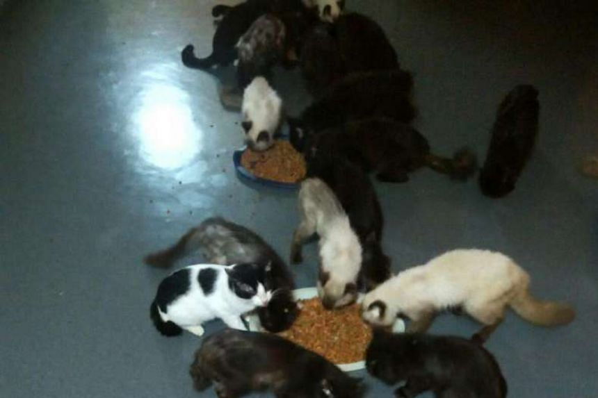 Of the 45 cats, 30 are at a cat shelter and five have been fostered out.