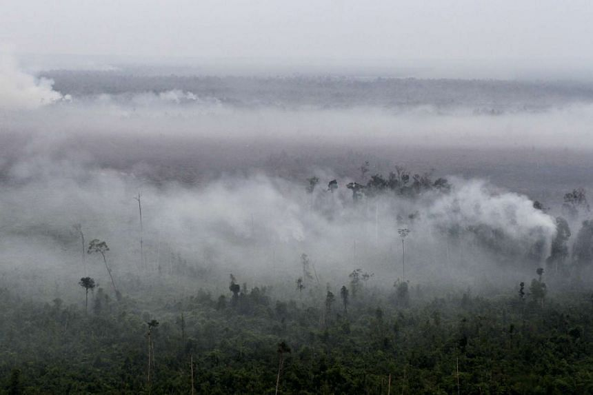 Smoke rising from a cleared forest land in Pelalawan Regency, Riau province in 2014.