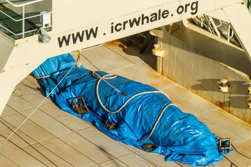 A handout photo made available by activist group Sea Shepherd allegedly shows a dead Antarctic mink whale onboard the Japanese vessel Nisshin Maru in Antarctic waters on Jan 15, 2017.