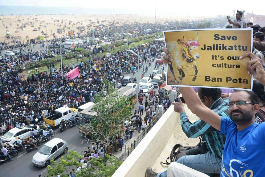 Indian students shout slogans and hold placards during a demonstration against the ban on the Jallikattu bull taming ritual at Marina Beach at Chennai on Jan 18 2017.