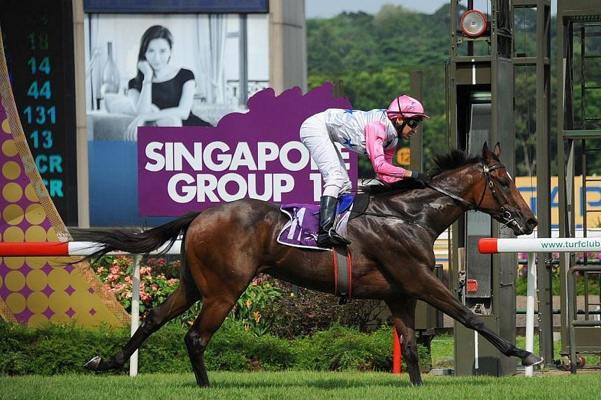 The thoroughbred Debt Collector had a standout year in 2016, winning six races on the trot, and was an easy choice for Horse of the Year.