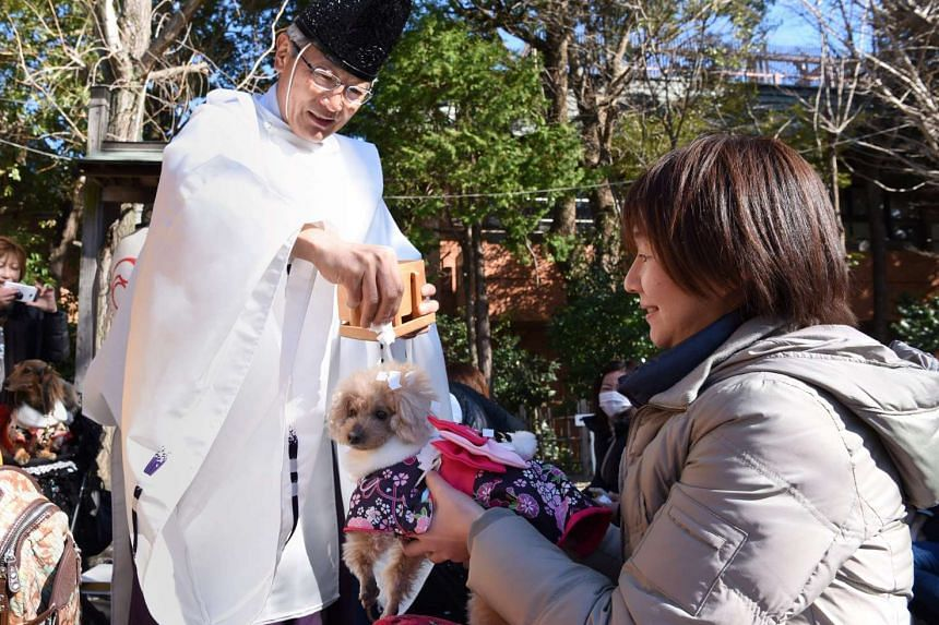 Pet owners have been flocking to the Ichigaya Kamegaoka Hachimangu shrine since it introduced New Year ceremonies for dogs and cats in 2000.