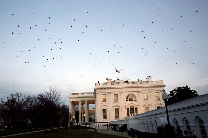 Birds flying over the White House in Washington, US.