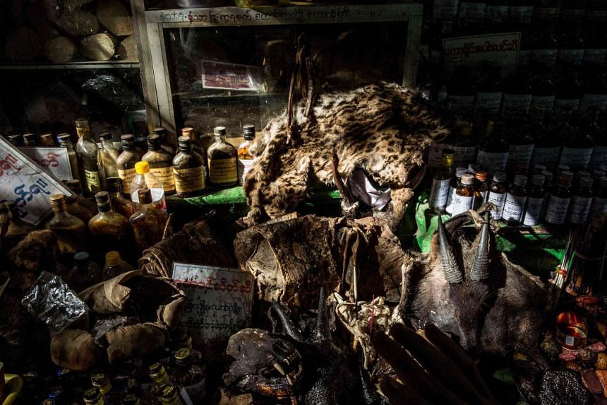 Parts of wild animals for sale at the traditional medicine shop at the sprawling grounds of Golden Rock pagoda in Mount Kyaikhteeyoe in Mon State, Myanmar.