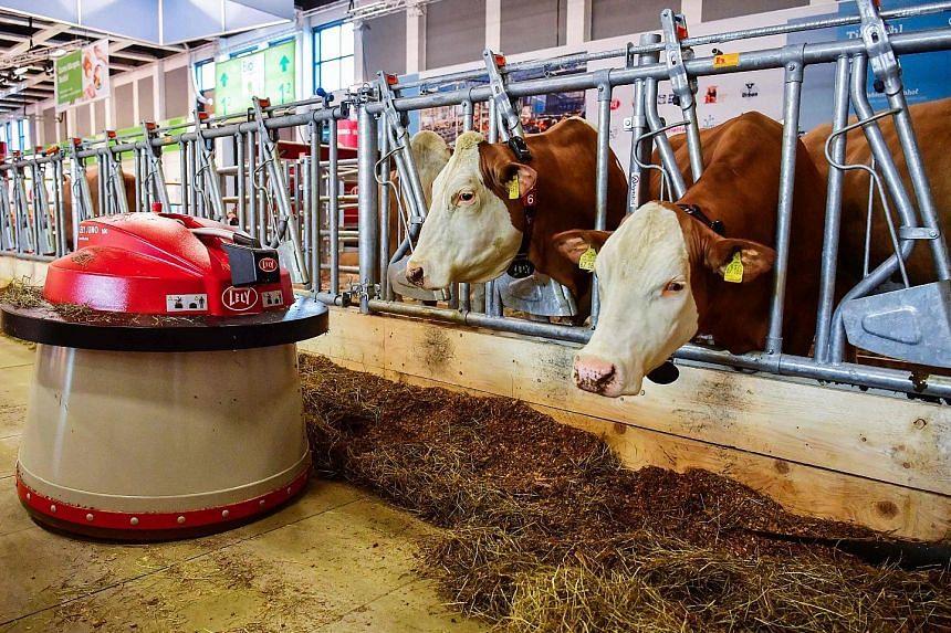 """A robot sweeping food towards two dairy cows at an """"automated farm"""" exhibit at the International Green Week food and agriculture fair in Berlin on Thursday. The annual trade event, which often features innovations in these industries, opened yesterda"""
