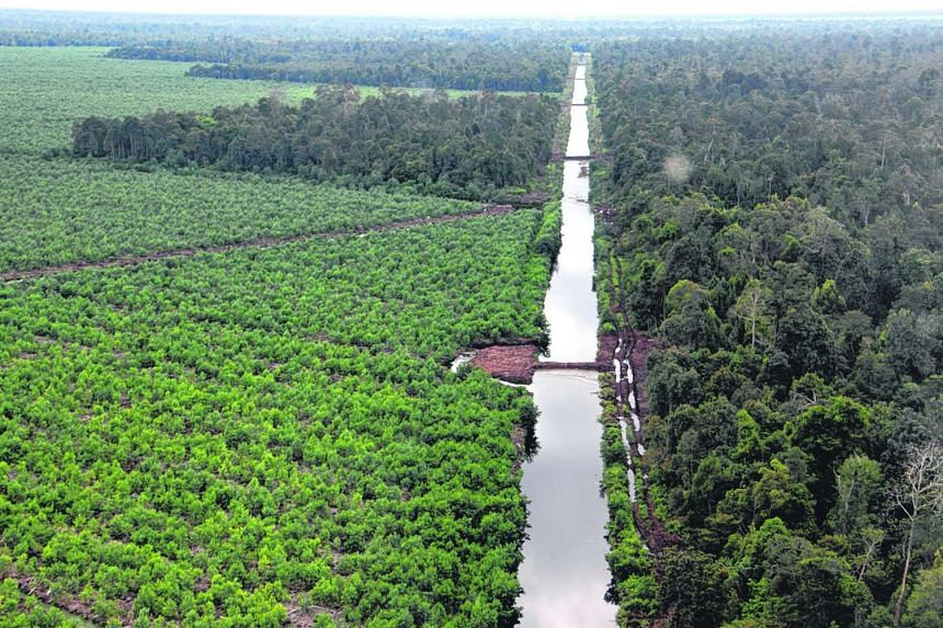 Concession land belonging to an Asia Pulp and Paper (APP) supplier in the Kerumutan province, in Riau.