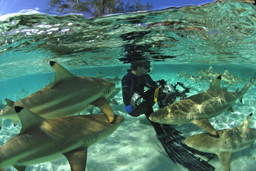 Marine conservationist and photographer Thomas Peschak with reef sharks.