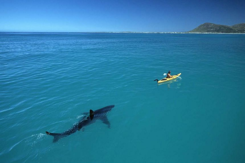 A great white shark swims near a canoe in this photo taken by marine conservationist and photographer Thomas Peschak.
