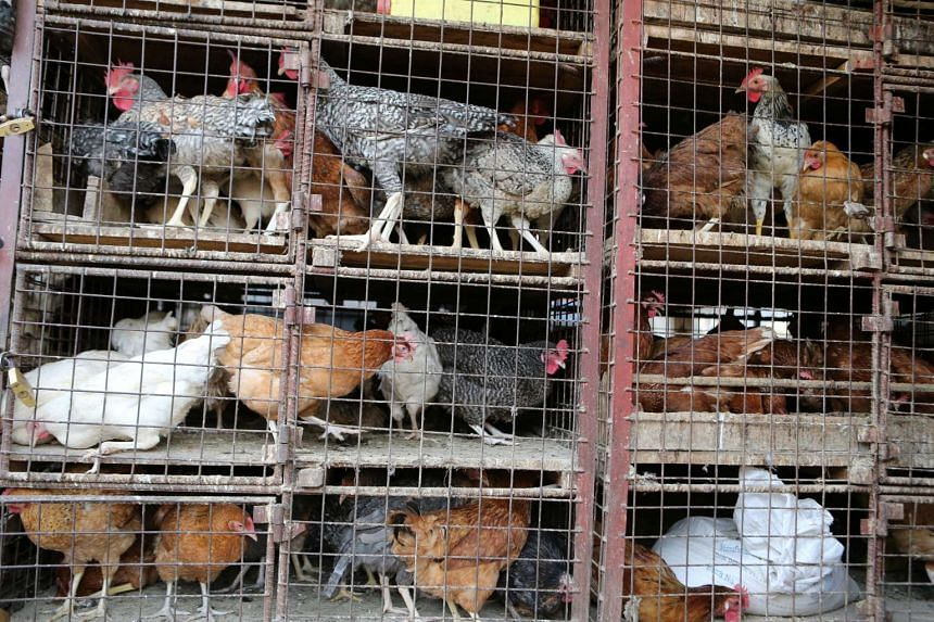 Chickens for sale are seen in cages at Kibuye market in Uganda's capital Kampala on Jan 17, 2017.