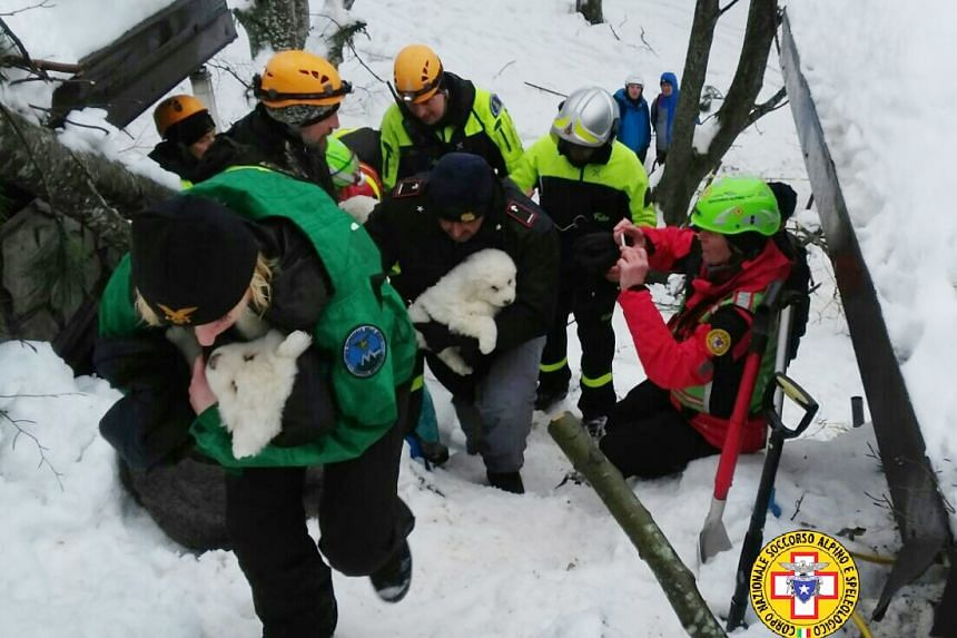 A rescue team carries puppies found at the avalanche-hit Hotel Rigopiano in Italy on Jan 23, 2017.