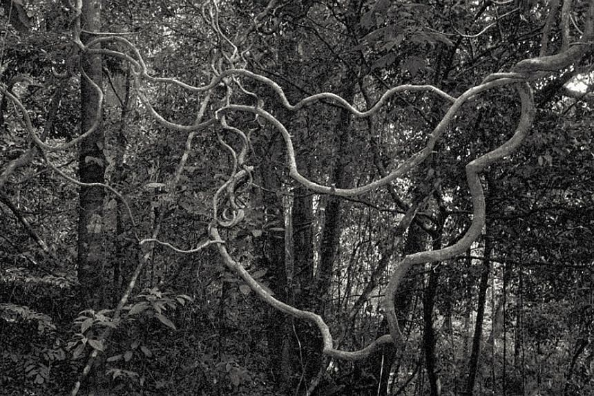 Beyond Wilderness, a book by Chua Chye Teck, features black-and-white photographs of forests (above).