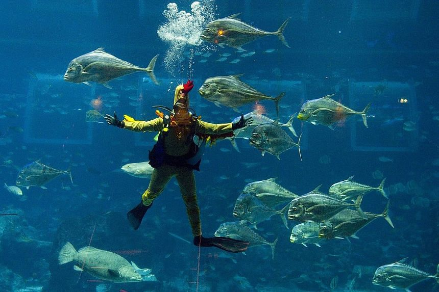 A diver performing in an underwater show at the S.E.A. Aquarium that tells the story of how the mischievous Monkey makes way for the Rooster, with the help of an underwater dragon. The performance is accompanied by special effects such as live drummi