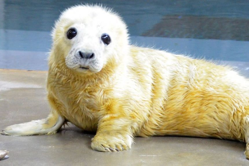 The Smithsonian seal pup which triggered a cute animal tweet-off.