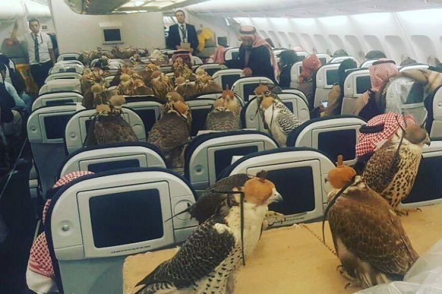 A photo of the hawks on board the plane has gone viral.