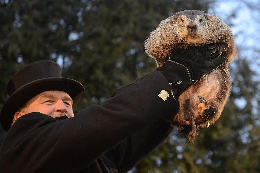 Handler John Griffiths introduces Punxsutawney Phil to the crowd at Gobbler's Knob on the 131st Groundhog Day in Punxsutawney, Pennsylvania, yesterday. Punxsutawney Phil, a famed US groundhog, emerged from its burrow yesterday and predicted six more