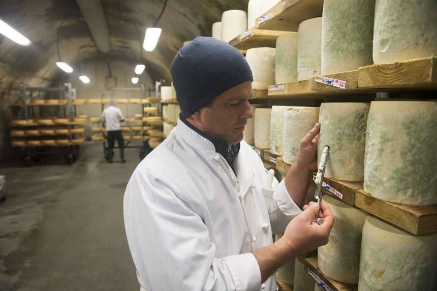 Mateo Kehler takes a core sample from a blue cheese at Jasper Hill Farm in Greensboro.