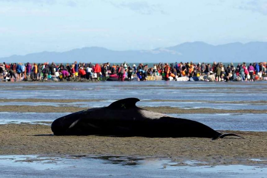 """A pilot whale stranded on a sandbank, marked with an """"X"""" to indicate it has died."""