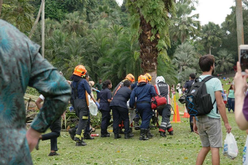 Members of the SCDF attend to a casualty after the 40m-tall Tembusu tree fell on Feb 11, 2017.