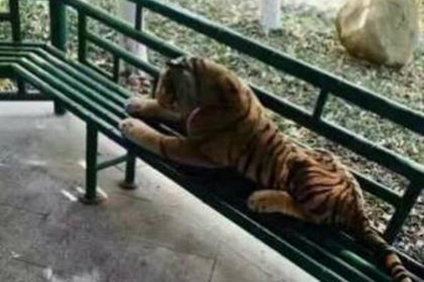 The large stuffed tiger had been spotted on a park bench.