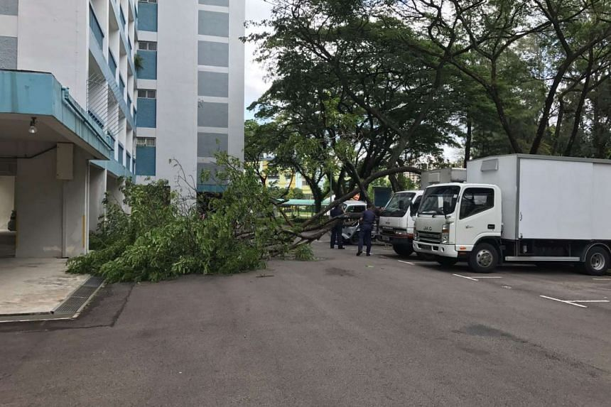 A tree fell in a carpark on Yuan Ching Road on Feb 13, 2017.