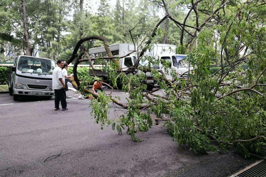 A tree fell in a carpark at Yuan Ching Road, injuring a woman.